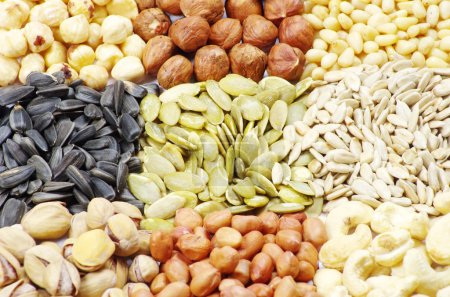 Photo for Seeds and nuts with collection - Royalty Free Image