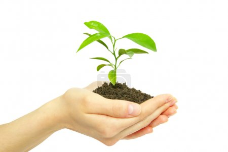 Photo for Holding a plant between hands on white - Royalty Free Image