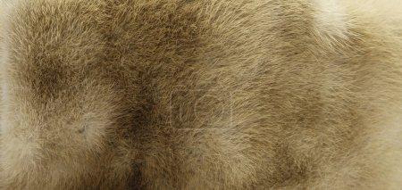 Photo pour Texture de fourrure beige - image libre de droit