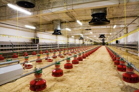 Photo for The modern and new automated integrated poultry farm - Royalty Free Image