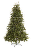 Green christmas fir tree without decoration.