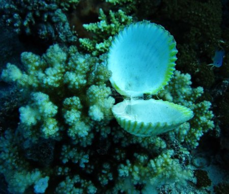 Group of coral and seashell in blue water.