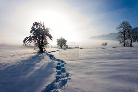 Footprints in Snow Leading to Tree