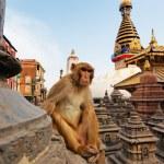 Sitting monkey on swayambhunath stupa in Kathmandu, Nepal