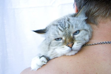 Photo for Angry cat on shoulder his owner - Royalty Free Image