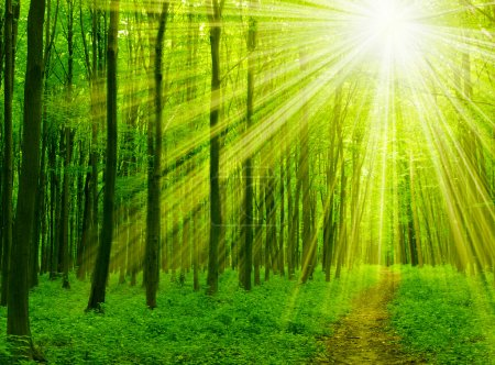 Photo for Green forest sunlight and shadows - Royalty Free Image