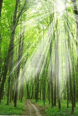 Photo pour Forêt verte lumière du soleil et ombres - image libre de droit