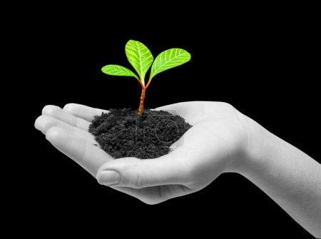 Planta verde sobre un negro