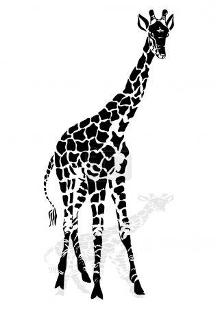 Vector illustration giraffe...