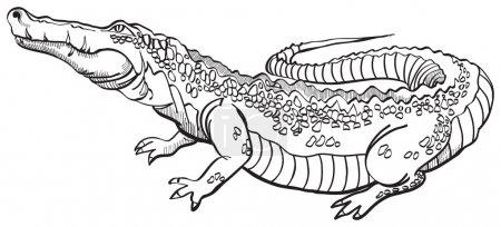 Illustration pour Crocodile - image libre de droit