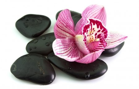 Stones with orchid flower