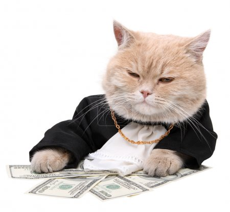 Photo for Red cat sitting on the dollar on the white background, Christmas, New Year - Royalty Free Image
