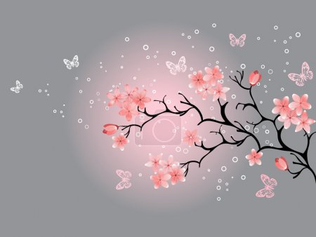 Illustration for Cherry blossom, grey background - Royalty Free Image