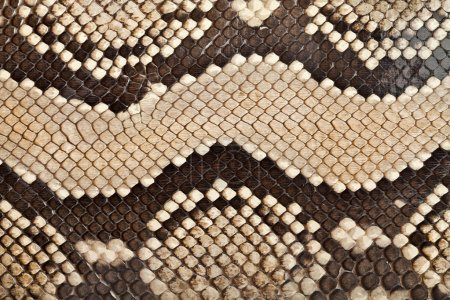 Snake leather texture