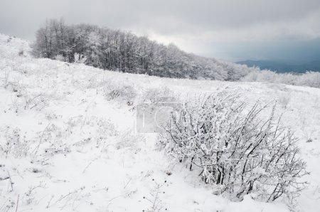 Photo pour Arbres d'hiver paysage neige blanc - image libre de droit