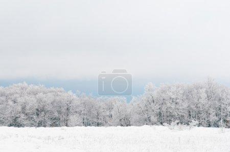 Photo pour Blanc d'hiver - image libre de droit