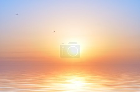 Photo for Ocean sunrise and birds - Royalty Free Image