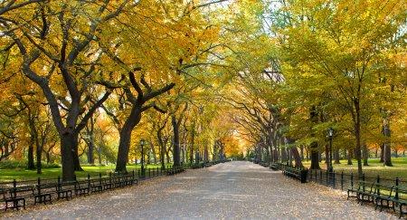 Photo pour Central park, new york. beau parc dans la belle ville. - image libre de droit