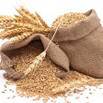 Sacks of wheat grains...