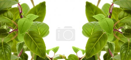 Photo for Green leaves isolated on white - Royalty Free Image