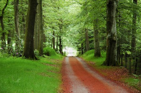 The road in the forest in summer