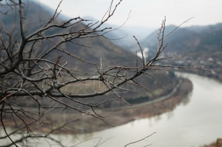 Branch of a tree with a river at the background