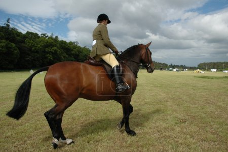 Horse with jockey at dressage tests in the park