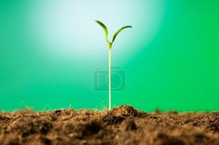 Photo pour Semis vert illustrant le concept de nouvelle vie - image libre de droit