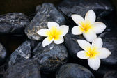 Frangipani flowers and spa stones
