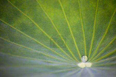 Photo pour Gros plan de goutte d'eau sur les feuilles - image libre de droit