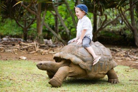 Photo pour Activités amusantes à Maurice. 4 ans garçon équitation tortue géante . - image libre de droit