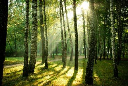 Photo pour Poutres de soleil matinal dans le parc en automne - image libre de droit