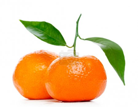 Photo pour Mandarines avec feuilles isolés sur blanc - image libre de droit