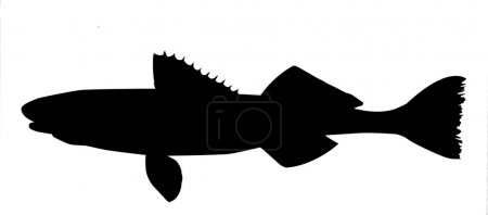 Illustration for Vector silhouette of fish on white background - Royalty Free Image