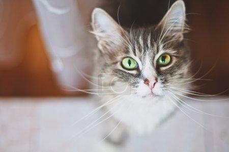 Photo pour Jolie cate. Profondeur de champ faible, focalisation sur le nez et les moustaches des chatons - image libre de droit
