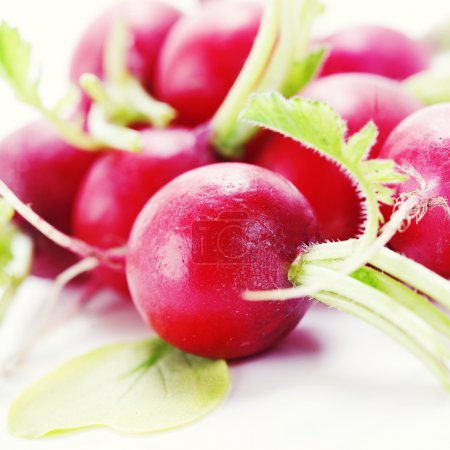 Photo for Bunch of red ripe radish - Royalty Free Image