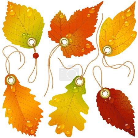 Photo pour Rabais automnal. vecteur de feuilles d'automne - image libre de droit