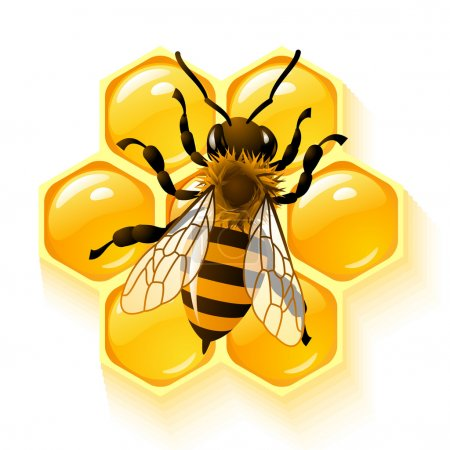 Bee on honeycombs background vector illustration...