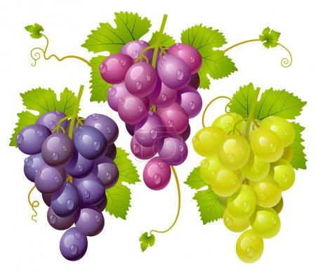 Illustration pour Trois grappes de raisins - image libre de droit