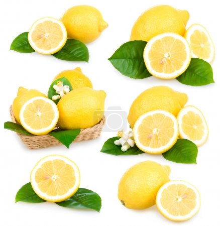 Photo for Set of ripe lemon fruits isolated on white background - Royalty Free Image