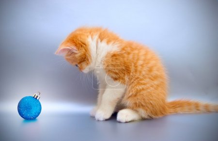 Nice red kitten with a Christmas toy