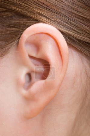 Closeup of a human ear