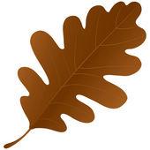 Autumn oak leaf isolated over a white background