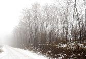 Mlha a dirtroad