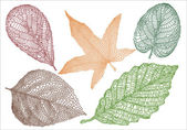 Set of textured autumn leaves vector background