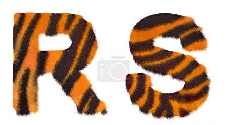 Photo pour Tigre est tombé les lettres r et s isolés sur fond blanc - image libre de droit
