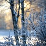 Winter landscape...