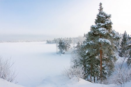 Snowy Landscape, Wood under snow, Russia...