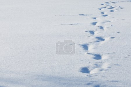 Photo for Snow background, White snow, the close up - Royalty Free Image