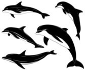 Set of various dolphins